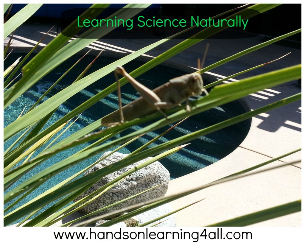 Learn Science Naturally-grasshopper2
